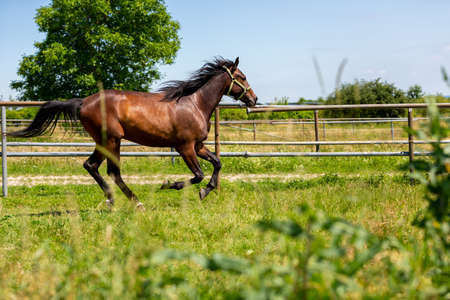 Portrait of a trotting horse on a meadow