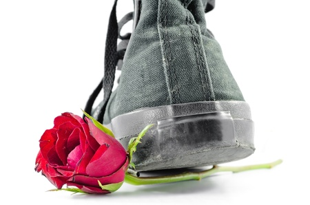 Shoes and roses on a white background  photo