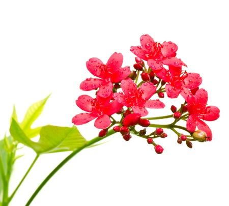 campo de flores: Flor sobre fondo blanco. Foto de archivo