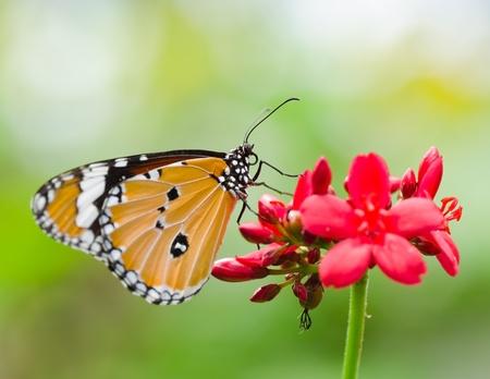 butterfly on flower: Butterfly in flower garden  Stock Photo