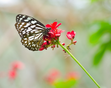 Butterfly in flower garden  Stock Photo