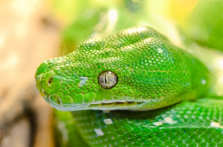 Close up green snake