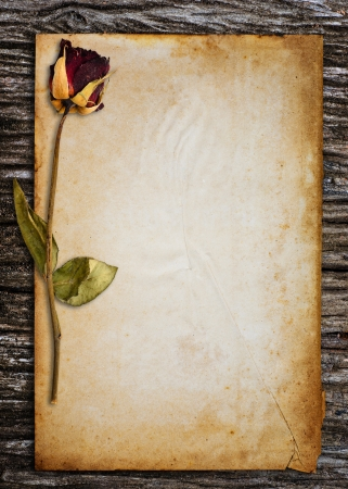 Dead roses put on old paper  photo