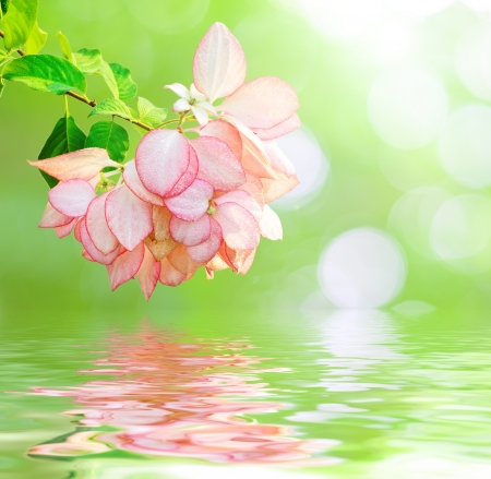 Pink flower reflected in water  photo