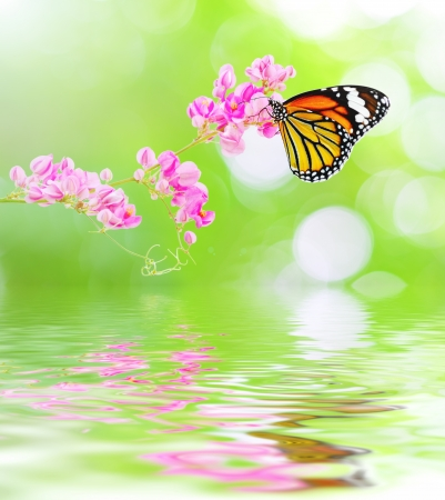 Butterfly hang on pink flowers reflected in the water  Stock Photo