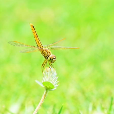 dragon fly: Dragonfly in nature  Stock Photo