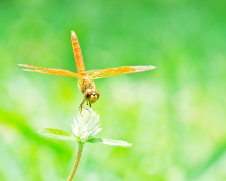 Dragonfly: Dragonfly in nature  Stock Photo