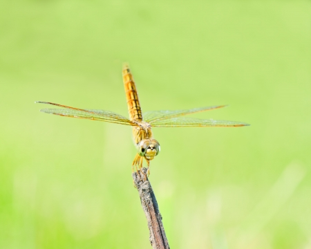 Dragonfly in nature. photo
