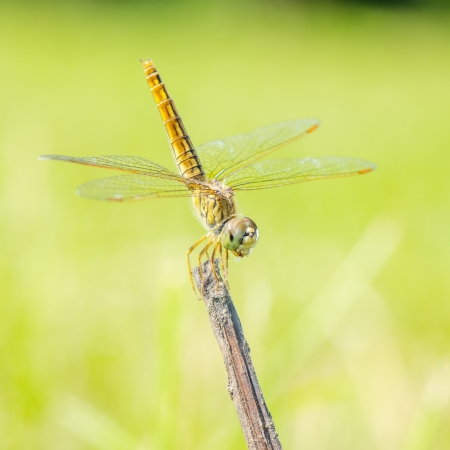 Dragonfly in nature  Stock Photo