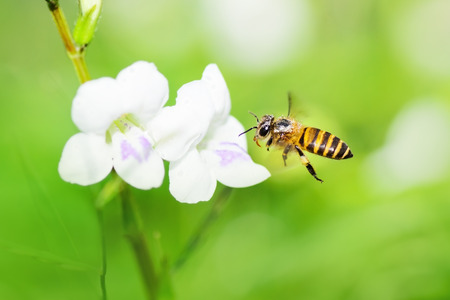 Bee flying in nature. photo