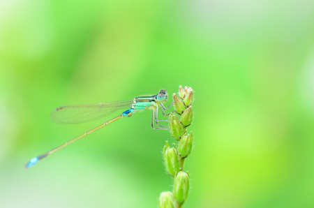 Dragonfly in nature.