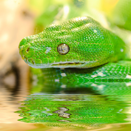 Snake reflected in water. Stock Photo