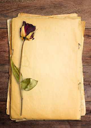Dead roses put on old paper. photo