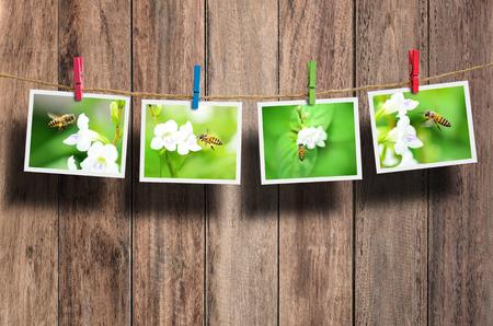 macro photo: Bee photo hanging on clothesline on wood background. Stock Photo