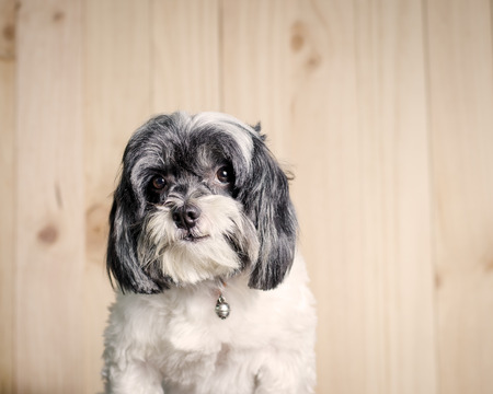 animal themes: Cute dog on wood background