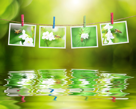 nature photo: Bee photo hanging on clothesline on nature background reflection in water.