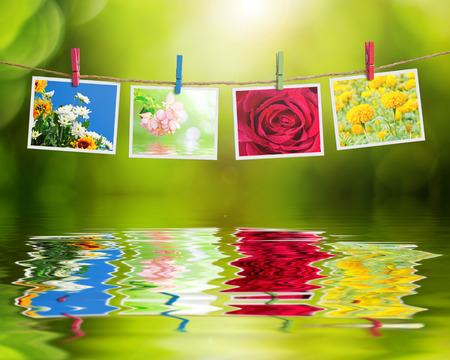 blossom honey: Flowers photo hanging on clothesline on nature background reflection in water.