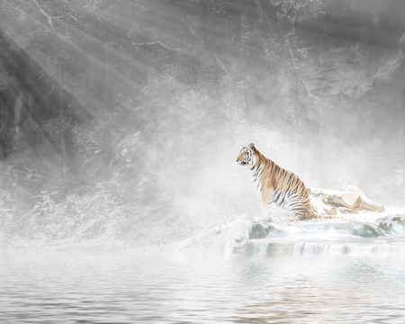 white water: Tiger in forest with sunlight and foggy.