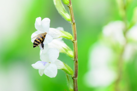 white flowers: Bee in nature.
