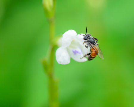 curative: Bee in nature.