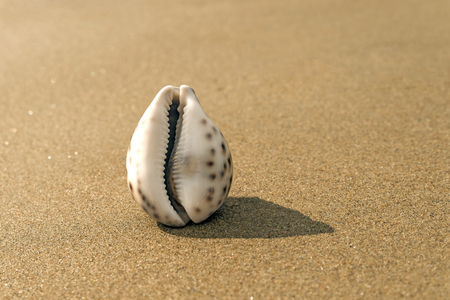 Sea shell on the sand in the form of female genitalia, vagina