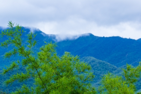 alpine zone: scenery of mountain with green bamboo in nature Stock Photo