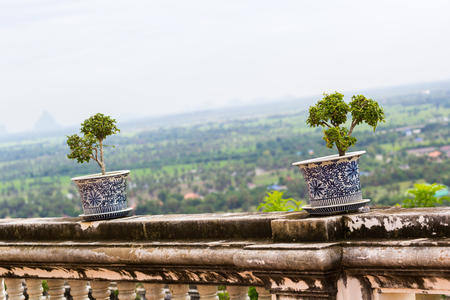 plant in ancient flower pot on balcony Stock Photo
