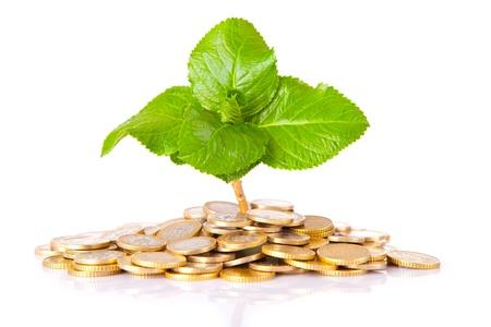 Las monedas y los vegetales, aisladas sobre fondo blanco Foto de archivo