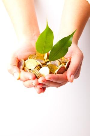 ahorro energia: Monedas y planta, aislado sobre fondo blanco