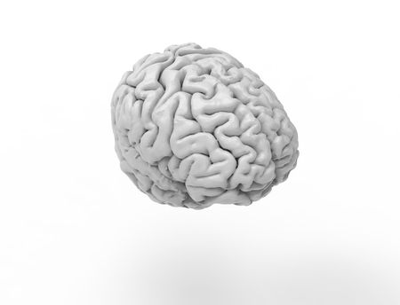 3D rendering of a human brain isolated in studio background.