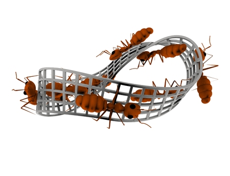 3d rendering of ants walking on a infinity figure isolated in white background Stock Photo