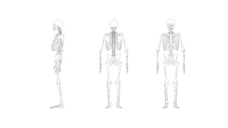 Skeleton multiple views of a computer renderd model of a human skeleton isolated on a white background. Banco de Imagens