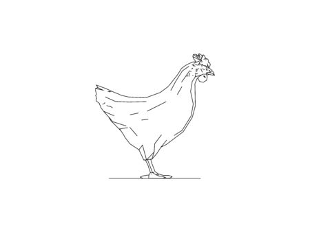 Vector line illustration of the side view of a chicken rooster hen isolated in white background Çizim