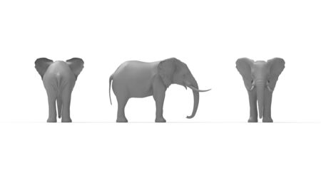 3D rendering of an elephant isolated in white empty space background. Zdjęcie Seryjne