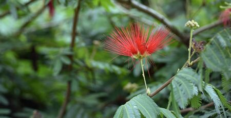 Flowers from the nature of south of Brasil.
