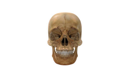 3D rendering of a human skull head bone person isolated