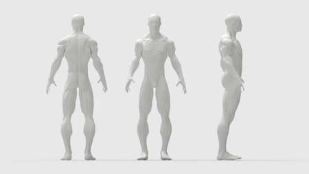 human muscles front side back view of a human being isolated in grey background Imagens
