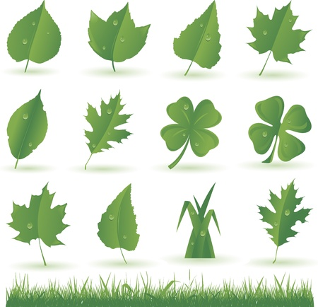 set of green leaves and grass Vector