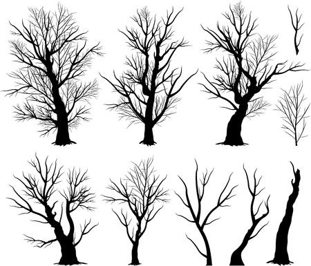 creepy: creepy trees Illustration