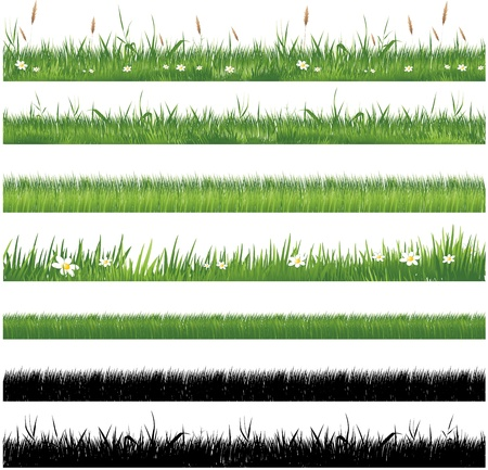 grass blades: Green grass collection