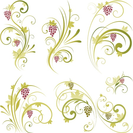 grapes on vine: Wine grapes design elements Illustration