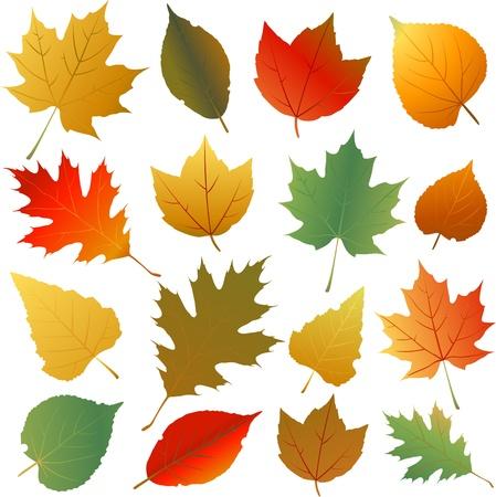 Leaf illustratie Stock Illustratie