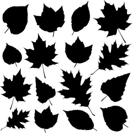 fall leaves on white: leaf silhouettes