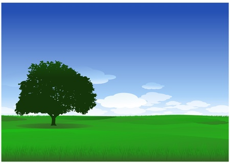 front or back yard: Nature tree landscape Illustration