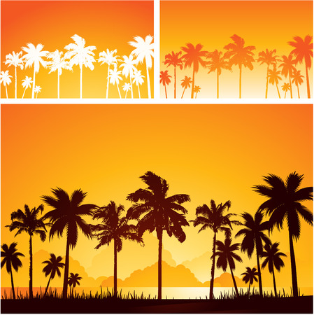 tropical beach panoramic: Summer beach sunset background with palm trees