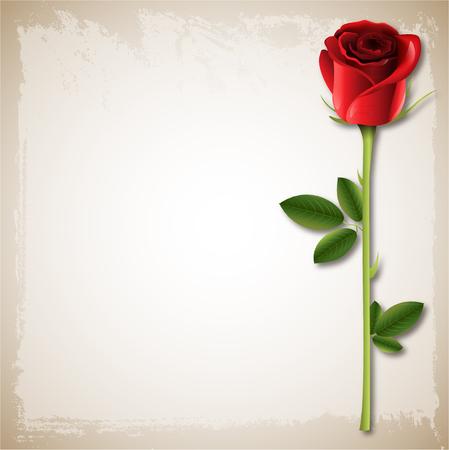 古い紙の背景に結婚式幸せなバレンタインの日背景 1 つ赤いバラ
