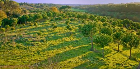 aerial view of a green forest at sunset