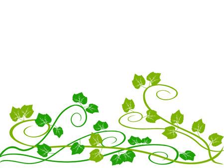 vin: green grape vine  Illustration