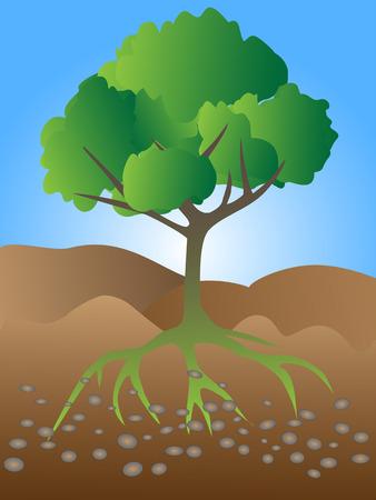 rock layer: tree growing