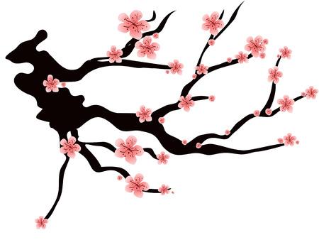 roze pruimen bloesem geïsoleerd op witte achtergrond  Stock Illustratie